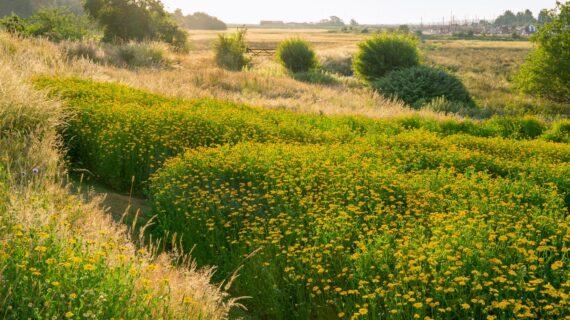 Taman Inggris Modern Ini Mengubah Yang Biasa Menjadi Yang Fantastis