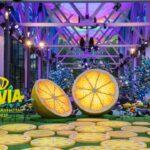 Di Tepi Barat Manhattan, Citrovia Membawa Kebun Lemon Aneh ke NYC
